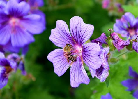 Keep mosquitoes away with these 10 plants – 23Viral