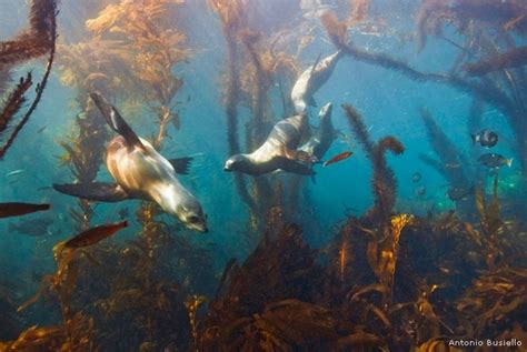 Photo of the Day: Underwater Forest • The National