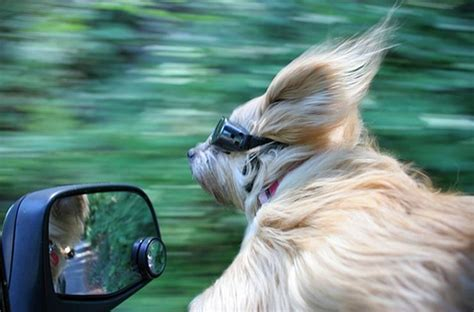 A Dog, a Car Window, and a Camera | Motley Dogs