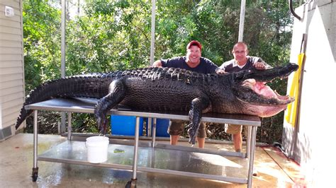 Florida Men Visibly Pleased By Dead, 765-Pound Alligator